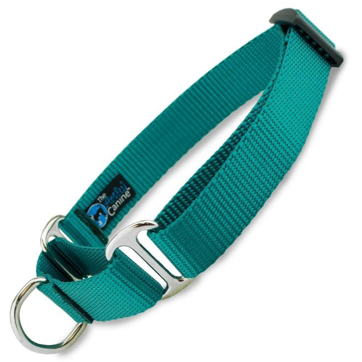 Martingale Dog Collar, Teal Nylon, Limited Slip Safety Collar