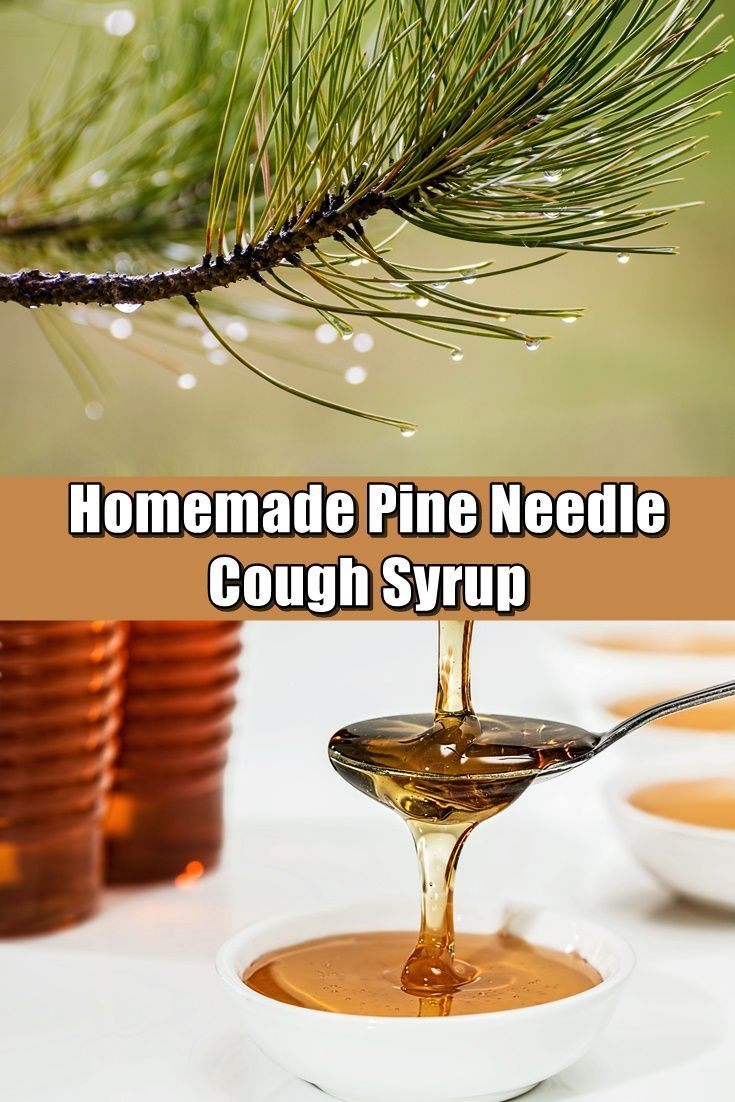 Homemade Pine Needle Cough Syrup For Powerful Cough Relief! - What if you were to discover one of the most potent cough suppressant and anti-inflammatory compounds is found in your backyard?