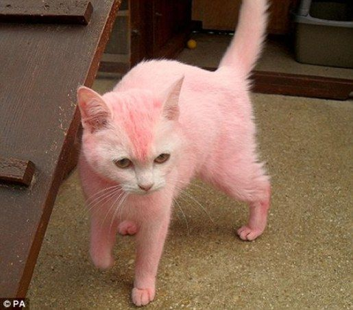 hot pink stuff | ... Of Hot Pink Kitty Tracked Down » Popular Fidelity » Unusual Stuff