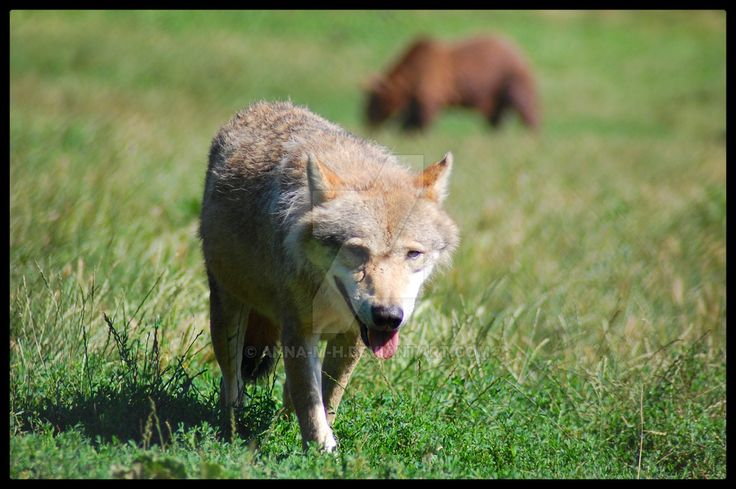 - WSPA medveotthon (bear farm) II - by Anna-M-H