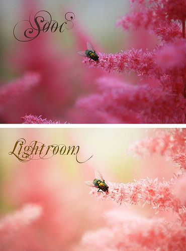 color pop in lightroom i so want this for christmas!!