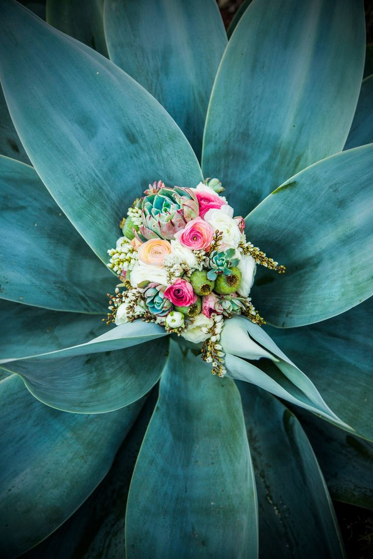 Succulent bouquet by Butterfly Bones Pjotography