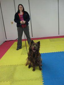 clicker training for dogs karen pryor pdf