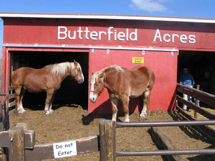 Butterfield Acres Farm