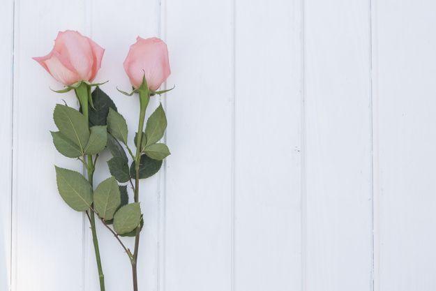 Rosas no fundo de madeira branca Foto gratuita