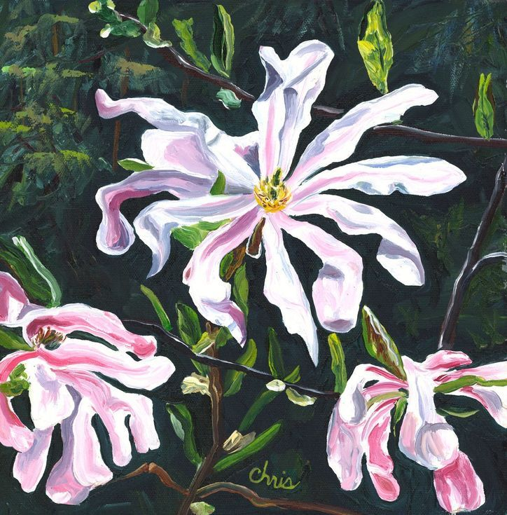 Pink Magnolia Blossoms 2013 Oil Painting By Christina M Plichta Painting Magnolia Blossom Oil Painting