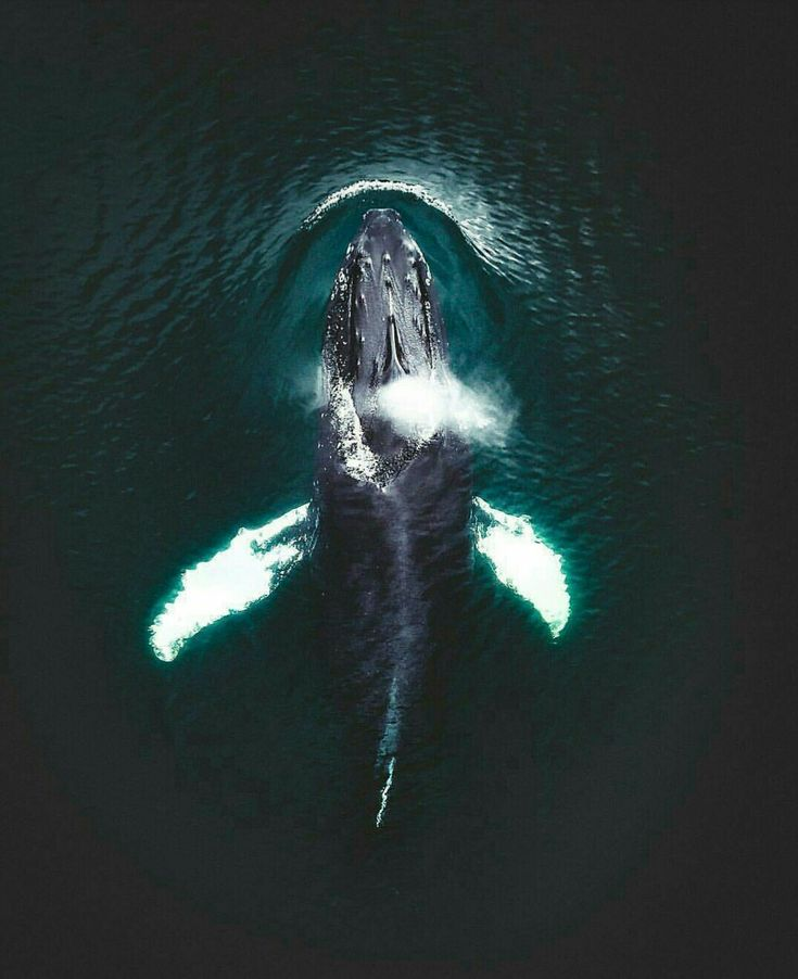 Amazing shot of a whale