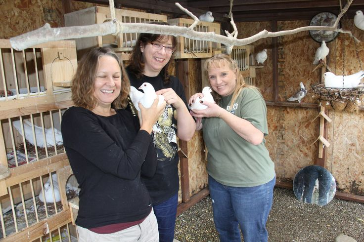 This is a picture in my aviary, left Jill Center me Cheryl and right Lori.   Jill and Lori are volunteers like me in Pigeon rescue.