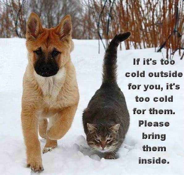 If it's too cold outside for you, it's too cold for them. Please bring them inside.