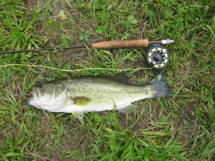 169 Best Images About Fly Fishing Photos And Videos On Pinterest Mouths The Fly And Trout