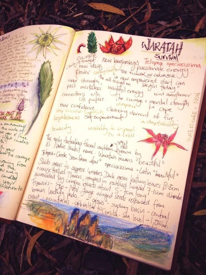 My Journal.  Each Deck has MANY journals and in these I sketch and write as I collect botanical information, local legends, personal experiences, dreams and inspirations. From these journal I begin to get together the the Guidebook that will accompany each deck and the first sketches for the block printing of the card for the deck.