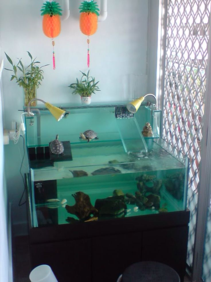 96 best images about turtle tank basking area on for Turtle fish tank