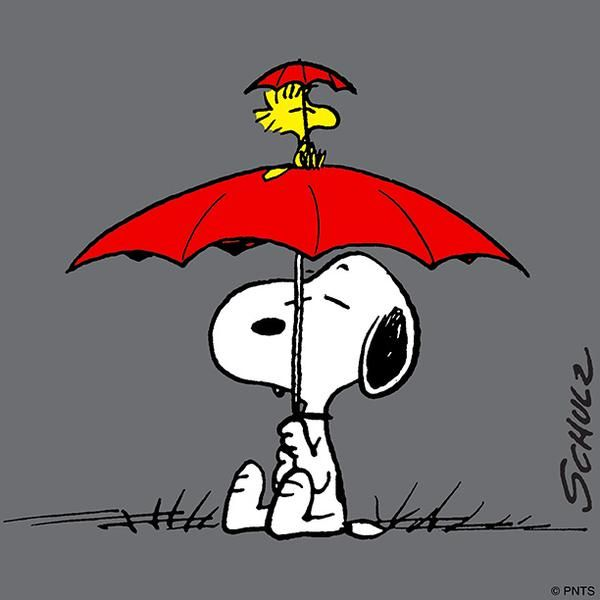 We're Covered - Woodstock Holding Umbrella and Sitting on Top of Snoopy's Umbrella                                                                                                                                                      More