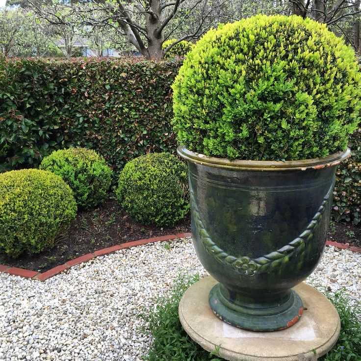 French Anduze urn in my box sphere garden. Sept 2015