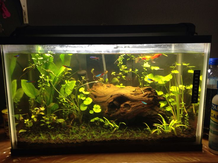 23 best images about 10 Gallon Aquarium on Pinterest ... 10 Gallon Home Aquariums