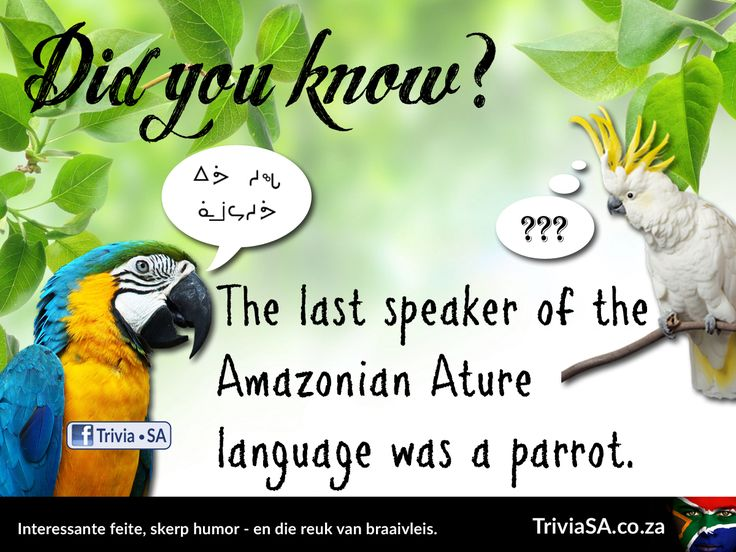 "The last speaker of the Amazonian Ature language was a parrot. (This ""did you know"" card was designed by AdSpark: http://adspark.co.za)"