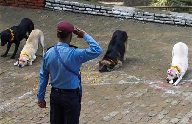 A rendőr tiszteletét, és megbecsülését fejezi ki kutyáiknak, társaiknak  #kutya #dog #kukurtihar #kutyabaráthelyek