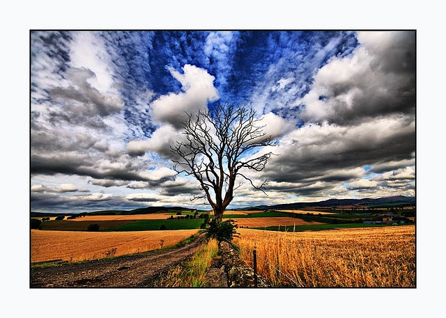 natureVivid Sky, Crop Growing, Clouds Formations, Vibrant Scene, White Clouds, Beautiful Sky, Nature'S Lov, Nature'S 3
