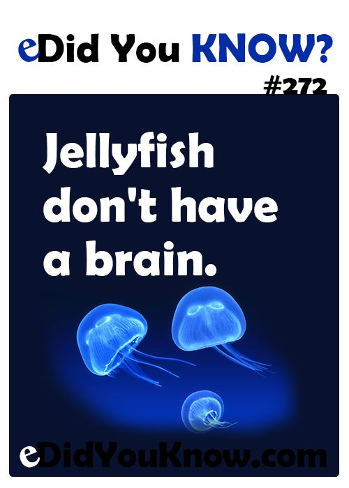 Jellyfish don't have a brain. http://edidyouknow.com/did-you-know-272/