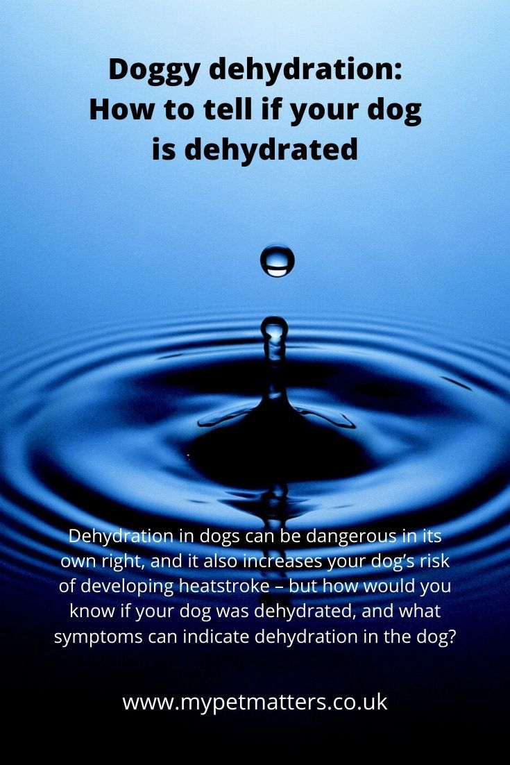 Doggy Dehydration How To Tell If Your Dog Is Dehydrated Your Dog Pet Health Doggy