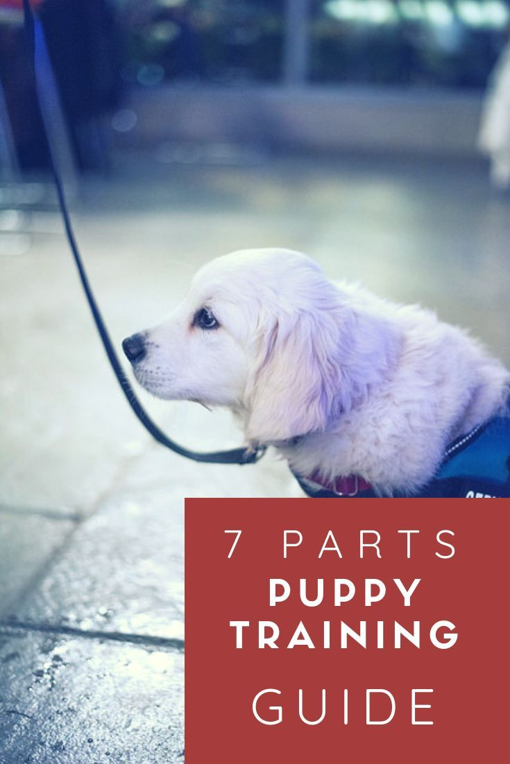 Puppy Training The Complete Guide 7 Easy Parts Dog Training