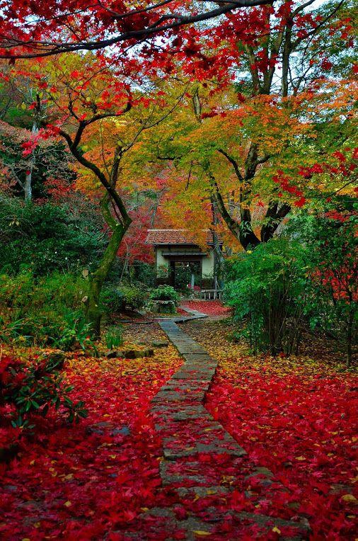 京都 直指庵 Kyoto, Jikishi an/temple, Japan. Que bien se lo pasan los vecinillos