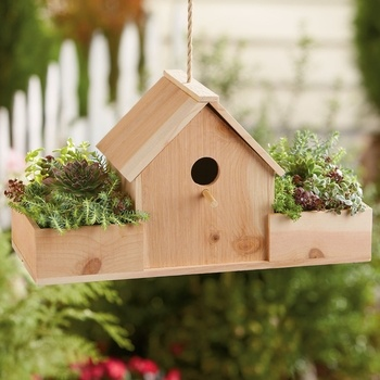 Birdhouse with Succulents Gift from Harry & David on Catalog Spree, my personal digital mall.