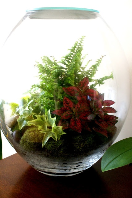 743 Best Images About Terrariums And Dish Gardens On