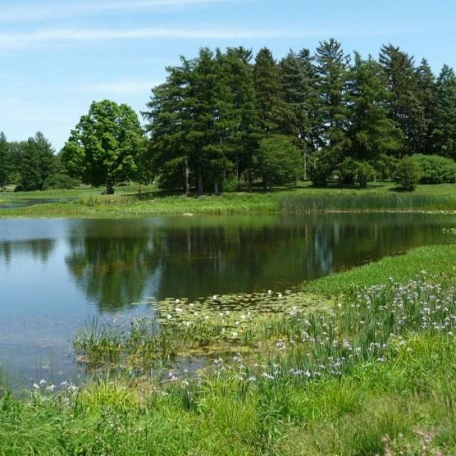 City Of Morton Illinois: 104 Best Morton Arboretum Images On Pinterest