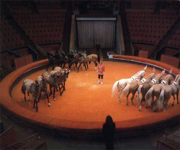 Конная 'сюита' в цирке