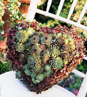 Succulent Heart Living Wreath
