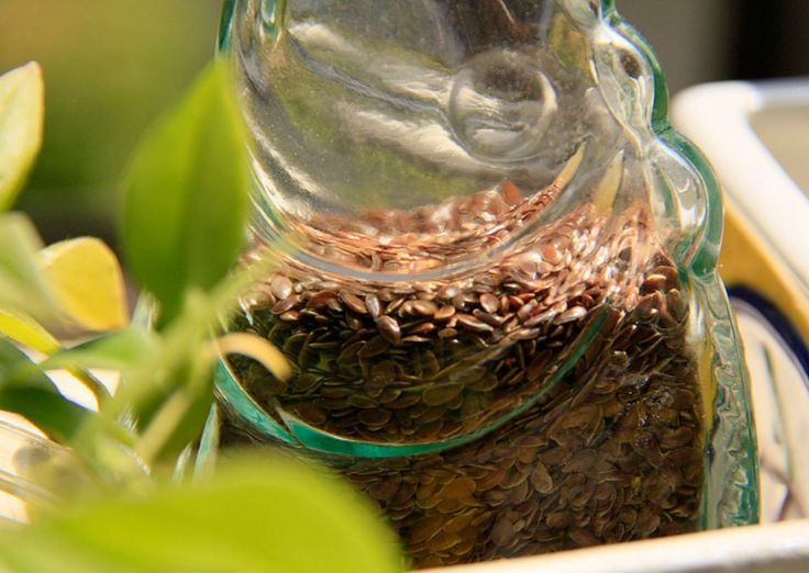Why Seeds are Nature's Farmacy for Health | One Green Planet