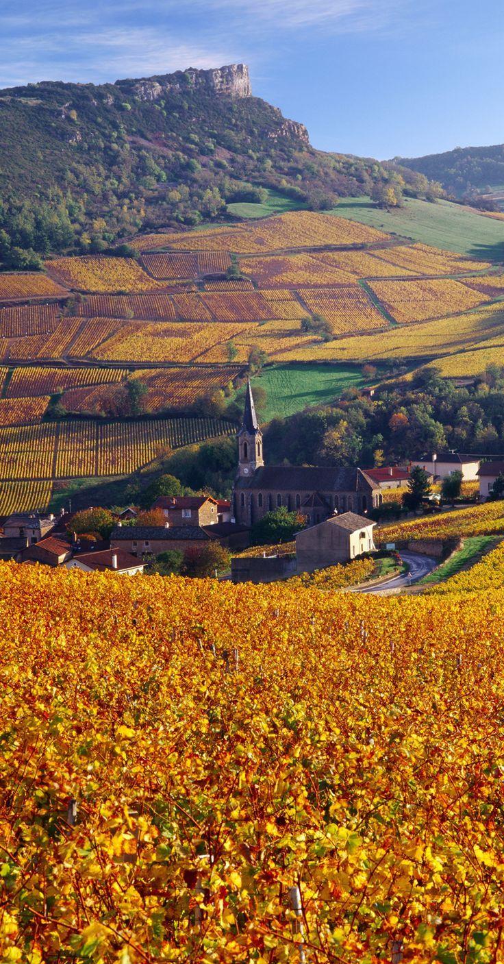 IN*71. Roche de Solutré et vignes en automne