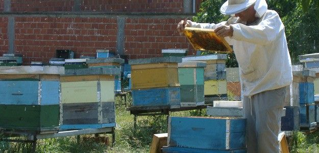 New Perspective on Honeybee Cultivation | Bee News