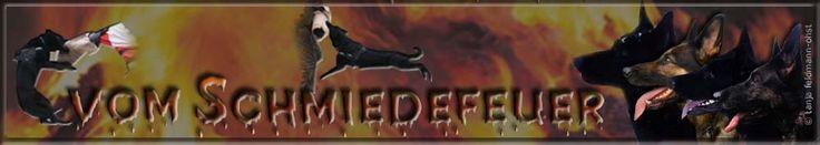 Professional German Shepherd Directory: Zwinger vom Schmiedefeuer