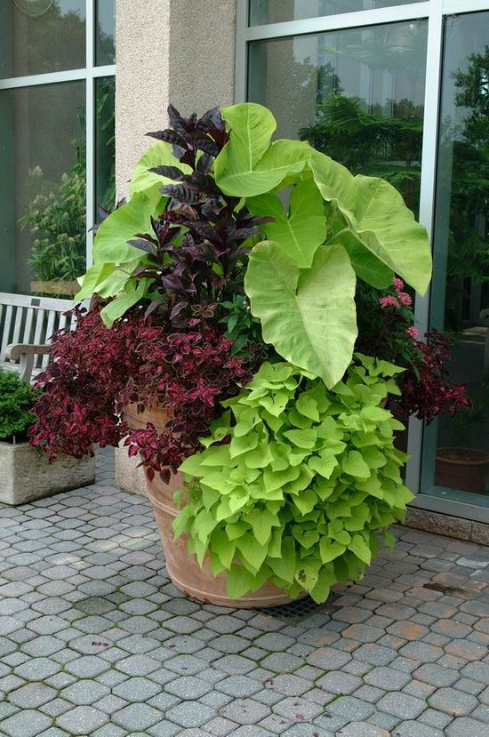 """Now THAT's a container! Need a list of probables to create this top to bottom: a bright green Colocasia/Caladium (Elephant Ear) // Persicaria microcephala 'Red Dragon' (or Lysimachia """"Firecracker"""" – which is invasive planted in ground) // Monarda (bergamot - bee balm) """"Pardon my Pink"""" // Coleus (red or pink) // Ipomoea - Sweet Potato Vine """"Sweetheart"""