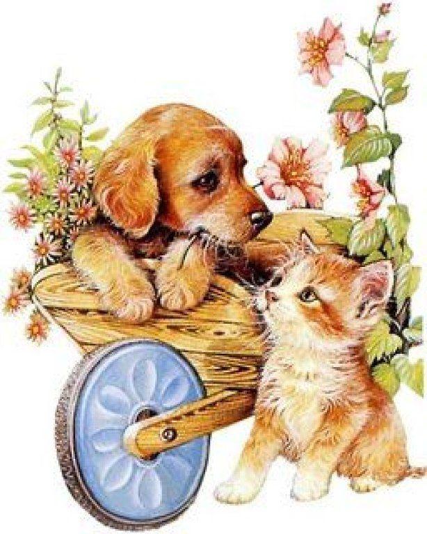 Лет, картинки кошка и собака для детей