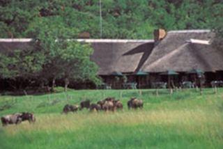 Bakubung Bush Lodge - Sun City