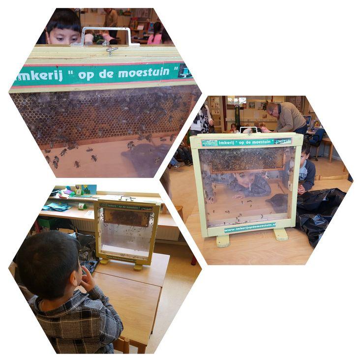 Goepr 1/2 op t startblok cuijk krijg bezoek van een imker. Hij komt vertellen, laten zien en proeven hoe belangrijk een bijenvolk is. En hij heeft een volk meegenomen. Spannend!