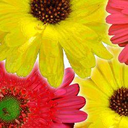 Felicitare animata de Florii cu mesajul: E ziua numelui tau. O zi asa cum iti doresti de Florii. La multi ani! http://ofelicitare.ro/felicitari-de-florii/e-ziua-numelui-tau-634.html