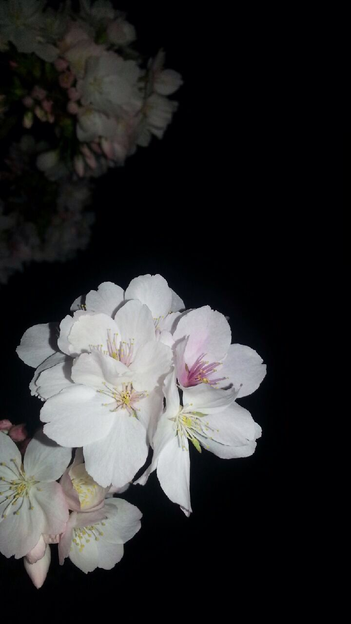 Night time flowers :)