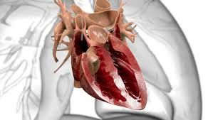 A medical animation is a short educational film, usually based around a physiological or surgical topic, that is rendered using 3D computer graphics. While it may be intended for an array of audiences, the medical animation is most commonly utilized as an instructional tool for medical professionals or their patients.