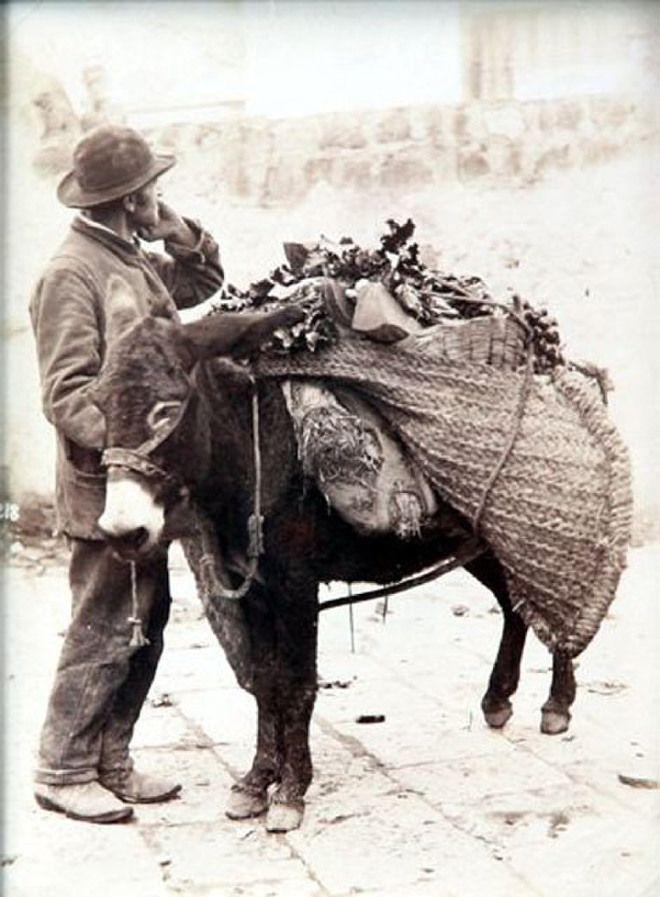 Il mercante di vigna con asinello