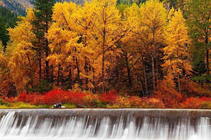 Bosque de Turmwater, Estados Unidos - Bosques del mundo que parecen encantados