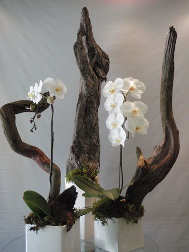 driftwood orchids while at Garden Party Flowers in Vancouver BC