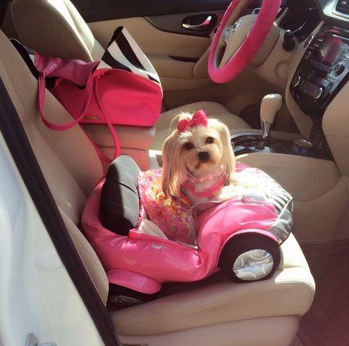 Maltese dog car seat idea