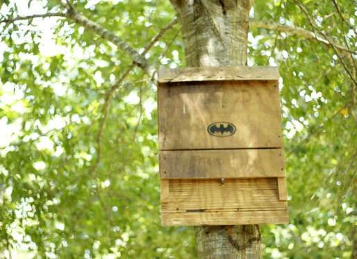 BUILD A BAT HOUSE A single bat typically eats 6,000 to 8,000 insects in a night, so consider these nocturnal critters your superhero sidekicks in the fight against bugs. Bolster your bat population by building a bat house, and be glad to see them swooping through your yard at dusk