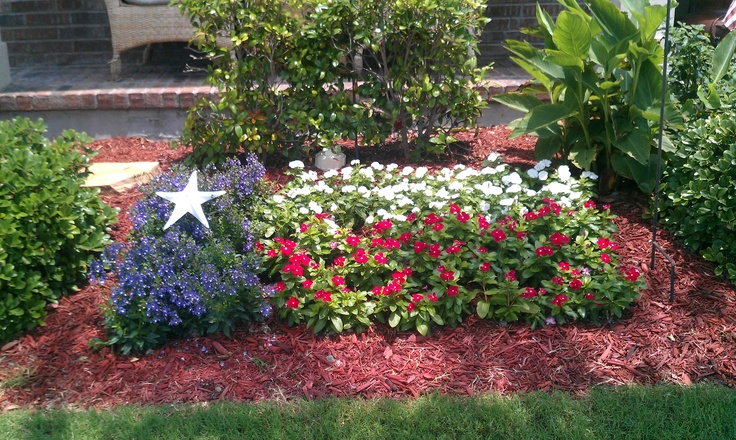 how to grow texas red star hibiscus