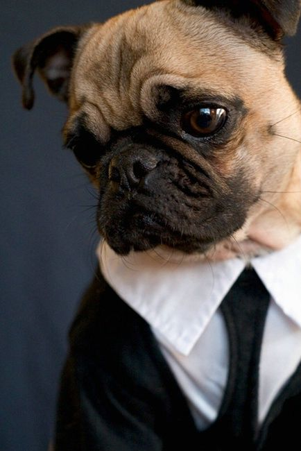 I imagine this is how Oswald dresses when he has meetings with his broker.
