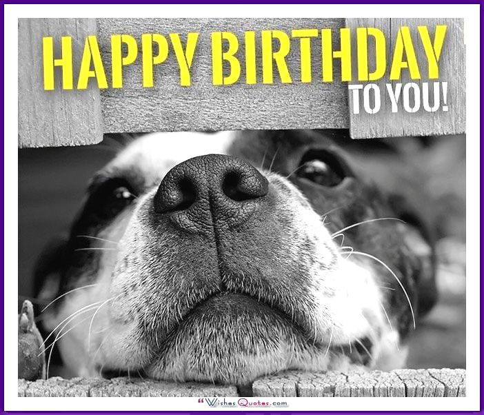 Happy Birthday Memes With Funny Cats, Dogs And Cute